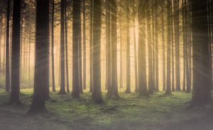forest-2984960_1920